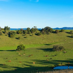 Ag land Hunter Valley